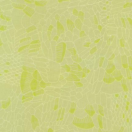 Afr-17292  Eucalyptus