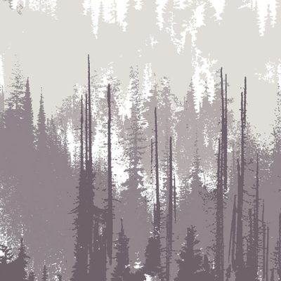 Evergreens  Dusk