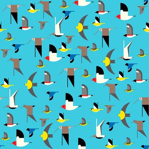 Birds  Multi