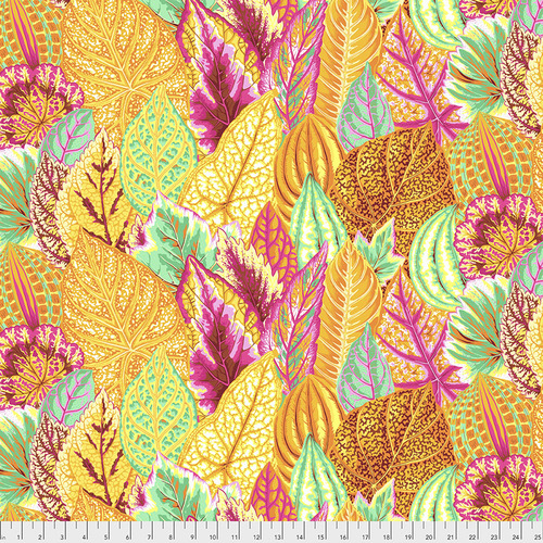 Coleus  Yellow