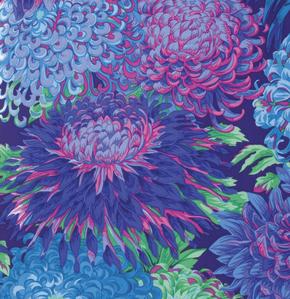 Japanese Chrysanthemum  Blue