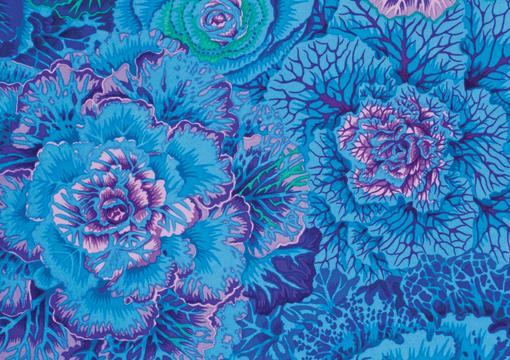 Brassica Blue 1