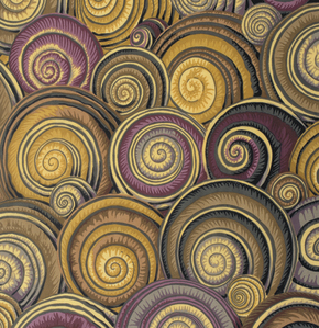 Spiral Shells  Brown