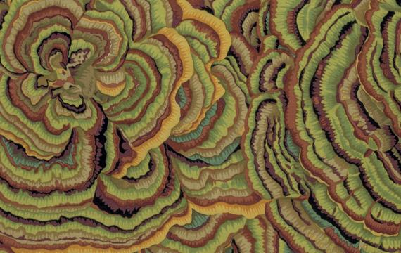 Tree Fungi  Moss
