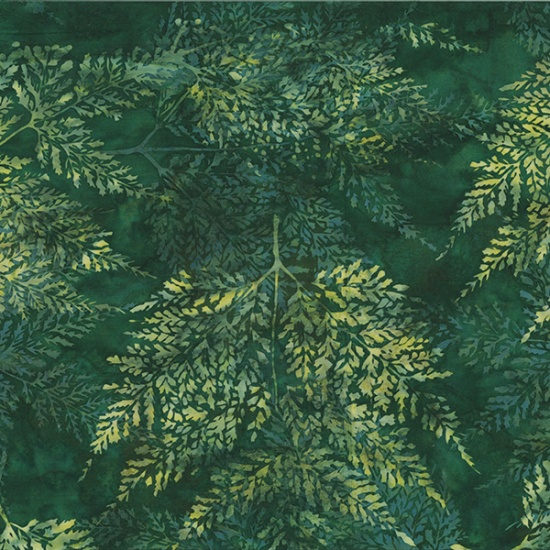 Fern  Evergreen