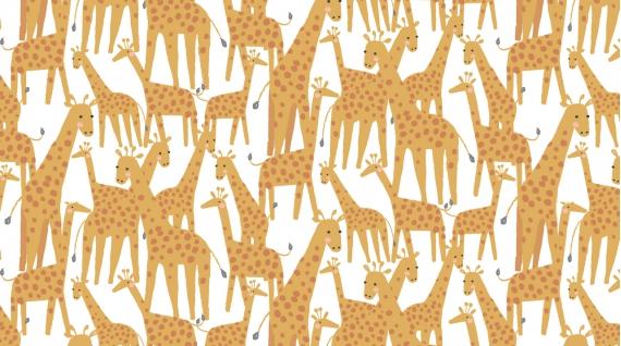 Giraffes  White